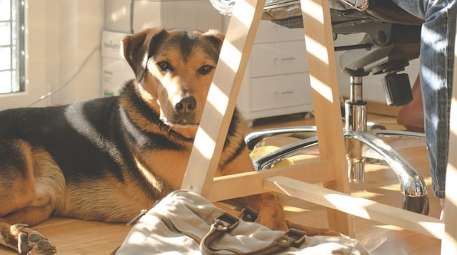Home Based Business Dog Sitting Next to Desk