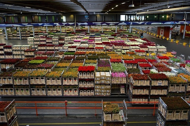How to Buy a Business Flowers on Pallets
