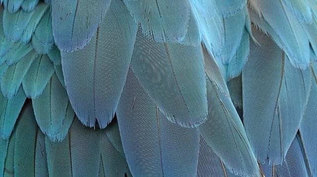 R&D Angel Wing